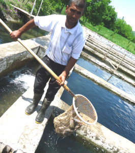 'Aquaculture can reduce food insecurity in Pakistan' | Macro 101 | Scoop.it