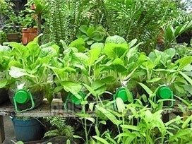 Food security and climate change mitigation through urban agriculture - The Philippine Star » Business Features » Agriculture | Food issues | Scoop.it