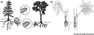 Convergence in Multispecies Interactions: Trends in Ecology & Evolution | MycorWeb Plant-Microbe Interactions | Scoop.it