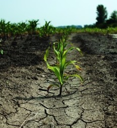 A Less Thirsty Future Through Engineered Crops? - The Equation | Organic Farming | Scoop.it