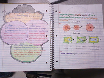 Mr. Byrne's Biology Class | Blogging in Education | Scoop.it