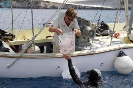 Les méduses prennent leurs aises dans les océans   Toxique, soyons vigilant !   Scoop.it