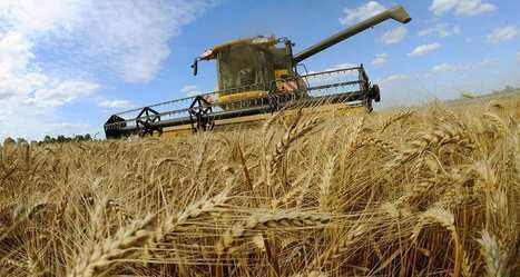 2016, la pire récolte de blé en France depuis 40 ans | Chronique d'un pays où il ne se passe rien... ou presque ! | Scoop.it