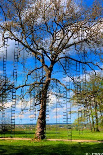 "François Méchain: ""The tree scales"" 