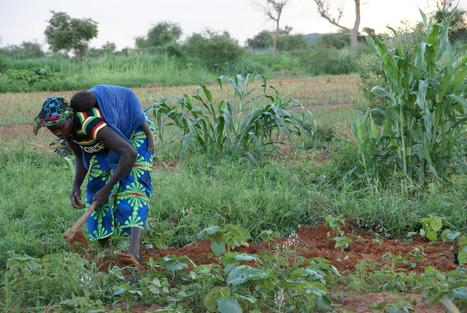 A greener Burkina: sustainable farming techniques, land reclamation and improved livelihoods | Mr Tony's Geography Stuff | Scoop.it