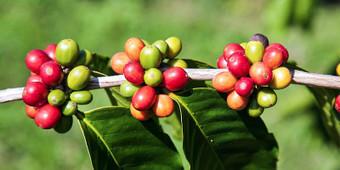 Le 10 piante che ci hanno cambiato la vita   best5.it   Scoop.it