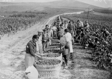 Champagne during WW2: From vines to victory   binNotes France - Wine & Culture   Scoop.it