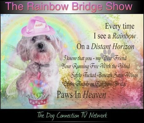 The Rainbow Bridge Show󾔏󾔏Coming Soon on The Dog Connection TV...Starring Canine... | The Dog Connection TV | Scoop.it