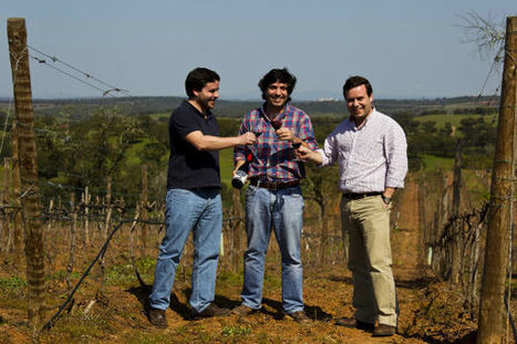 Blend All About Wine   Esoteric Not Erotic: The Explicit Wines of Jorge Rosa Santos e Filhos   Wired Wines of Alentejo   Scoop.it