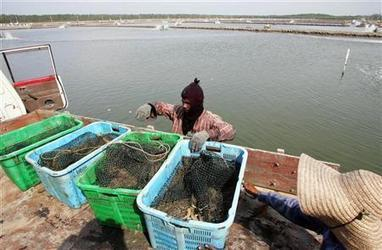 Mangroves under threat from shrimp farms: U.N. | CLIMATE CHANGE WILL IMPACT US ALL | Scoop.it