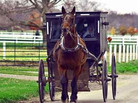 Amish buggy crash: Mary Byler and daughter die after truck collides with horse ... - WPTV | American Denomination | Scoop.it