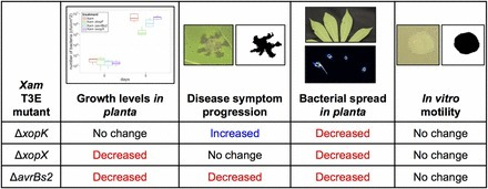 Quantitative, Image-Based Phenotyping Methods Provide Insight into Spatial and Temporal Dimensions of Plant Disease | Plant immunity | Scoop.it