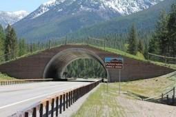 6 of the world's most ingenious wildlife overpasses [PICs]   May geo 152   Scoop.it