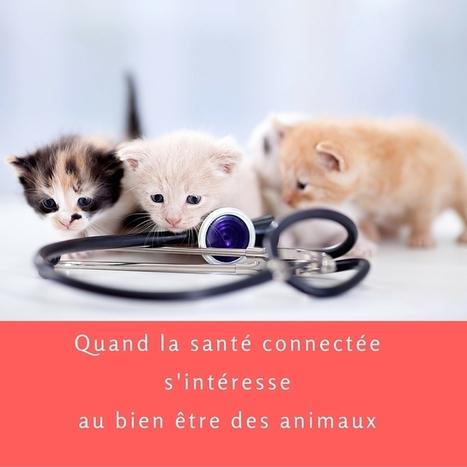 La santé connectée s'intéresse au bien être des animaux | Santé digitale | Scoop.it