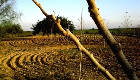 Residuos orgánicos para luchar contra la desertificación | Ecología sostenible | Scoop.it