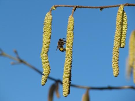 Les apiculteurs du Limousin tirent une nouvelle fois la sonnette d'alarme - France 3 | Abeilles, intoxications et informations | Scoop.it