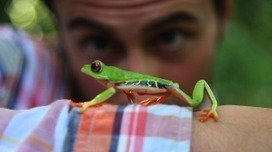 "BEST ADS: Rainforest Alliance ""Follow the Frog"" 