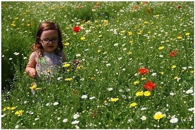 Lost Gardens of Heligan sees bee population increase - This is Cornwall | Gardening is more than Digging the Dirt | Scoop.it