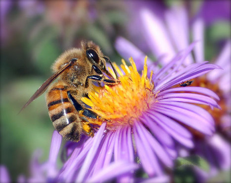 Bees can sense—and learn from—the electric fields of flowers | Social Foraging | Scoop.it