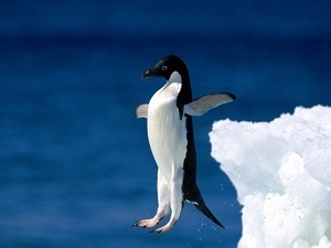 Mediocre Me - Be the First Penguin | Mediocre Me | Scoop.it