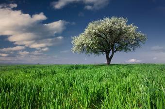 Au pied de mon arbre... généalogique | GeneProvence | Archives et généalogie | Scoop.it