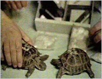 Tortugas y ratones en la Luna | Microsiervos (Ciencia) | BROTES DE NATURALEZA | Scoop.it