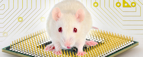 IBM Creates Neural Network Chip as Large as a Mouse Brain | Systems Theory | Scoop.it