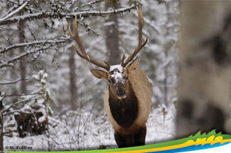Parks Canada - Jasper National Park - Welcome to Jasper National Park | Alberta Trip | Scoop.it