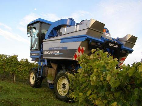 Vendanges 2016 en PACA: les premières remontées de terrain - Coordination Rurale (CR)   Winemak-in   Scoop.it