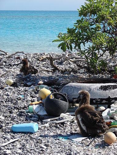 Midway Island: la condanna dei rifiuti prodotti dall'uomo - Radio Pereira | Prodotti chimici e detergenti | Scoop.it