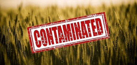 #FF #Monsanto Report Says #GMO Crop Contamination Cannot Be Stopped | Messenger for mother Earth | Scoop.it