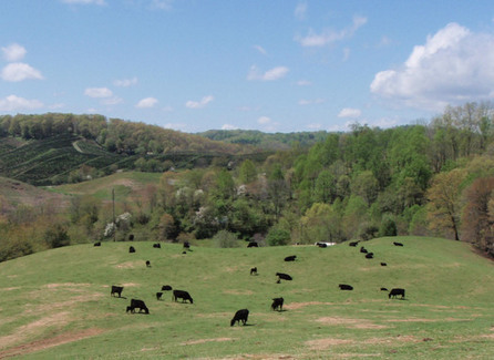 NC Crops Growing Stronger Than the Farms Themselves   New River News   Scoop.it
