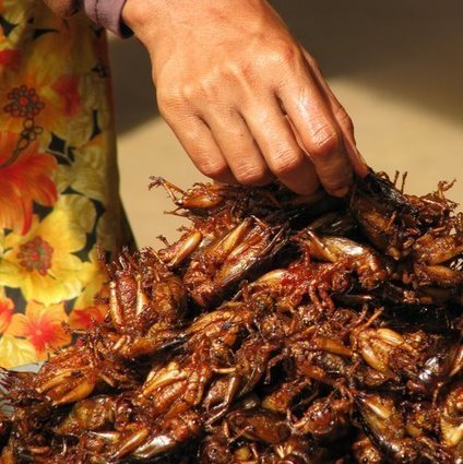 European push for more edible insects | Food & Beverage | Entomophagy: Edible Insects and the Future of Food | Scoop.it