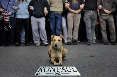 """Riot Dog"" Louk: Athens Protest-Hund 
