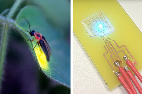 14 Smart Inventions Inspired by Nature: Biomimicry - World Industrial Reporter | biomimicry | Scoop.it
