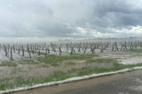 'Catastrophic' hail in Chablis, Beaujolais and Cognac  | Vitabella Wine Daily Gossip | Scoop.it