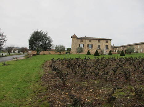 The Gray Report: Impressions of Beaujolais | Wine website, Wine magazine...What's Hot Today on Wine Blogs? | Scoop.it