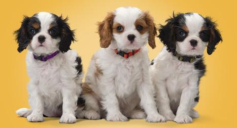 Excessive Barking Solutions   Pets   Scoop.it