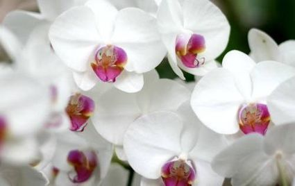Orchids 101: The biology behind these elegant flowers | Biodiversity protection | Scoop.it