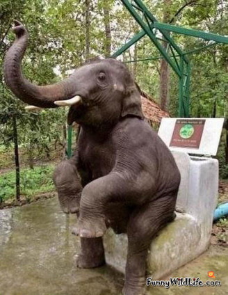 Funny African Elephant Videos and Pictures | Elephant Facts | Scoop.it