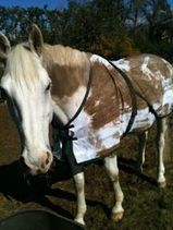 """Pro Equine Grooms - """"Washing"""" a Mane in Winter 
