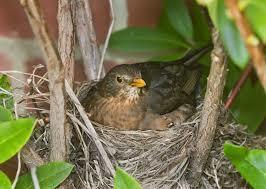 4 Ways to Stop Birds From Taking Over Your Home. | Home Improvment, Business | Scoop.it