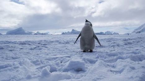World's largest marine protected area declared in Antarctica - BBC News | Environmental issues | Scoop.it