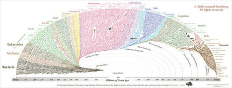 Tree Of Life: The History of the World, Visualized | A perspective of our world | Scoop.it
