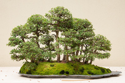 Truly outstanding examples.  Pacific Rim Bonsai Collection | Container Gardening | Scoop.it