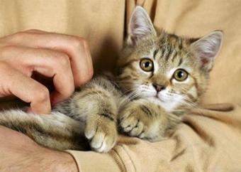 Ouverture du premier bar à chats français à Paris | Docs utiles pour la classe | Scoop.it