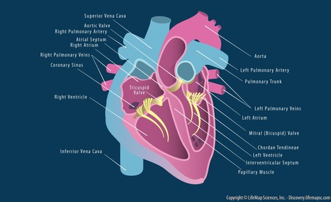 Defining Key Design Criteria for Cardiac Tissue Engineering | Tissue  and organ Engineering and Manufacturing | Scoop.it