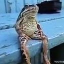 Man reports frog stalker | What is funny?:( | Scoop.it