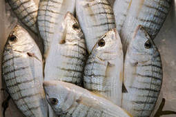 FAO urges strong and effective implementation of global anti-rogue fishing treaty | Aquaculture Directory | Aquaculture Directory | Scoop.it