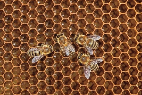 Why Nature Prefers Hexagons | Biomimicry | Scoop.it